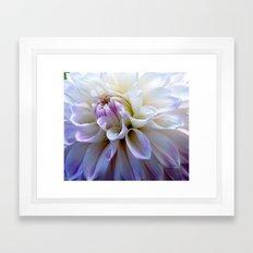 Dahlia closeup Framed Art Print