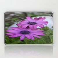 Purple and Pink African Daisy Flowers Laptop & iPad Skin