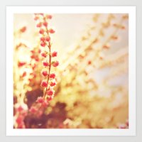 Sweet Heather Nature Photography Art Print