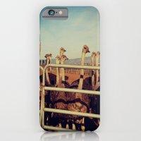 iPhone & iPod Case featuring Ostrich Farm by rachellam