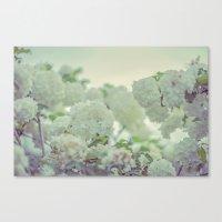Spring white flowers Canvas Print
