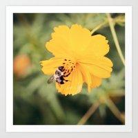 Yellow Bumblebee 2 Art Print