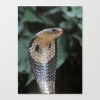 I am not slimey Canvas Print