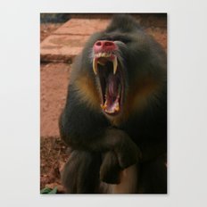 Baboon in Lake District Zoo Canvas Print