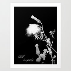 Whiter Shade of Pale Art Print