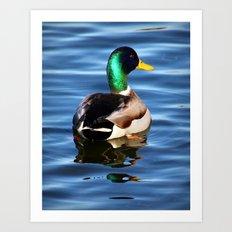 Lucky Duck  Art Print