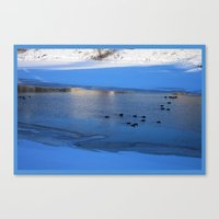 Ducks in icy waters Canvas Print