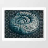 Ammonite On Pattern 2201 Art Print