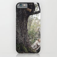 Oak tree iPhone 6 Slim Case