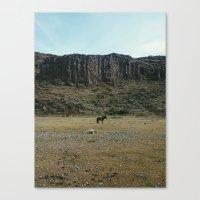 Rock Pasture Pony Canvas Print