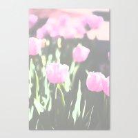 pink land Canvas Print