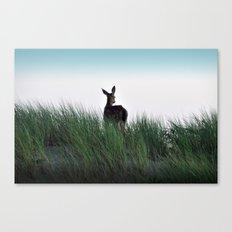 Deer Stop Canvas Print