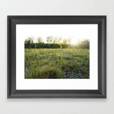 Lakeside Daisy Framed Art Print
