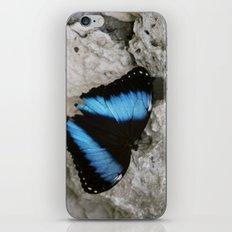 Papillon II iPhone & iPod Skin