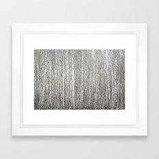Birch grove Framed Art Print
