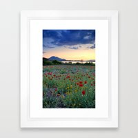 Red Poppies. Sunset at the lake Framed Art Print