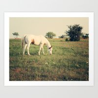 It's not a unicorn! It's a white horse! Art Print