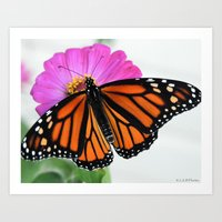 monarch/flower Art Print