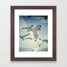Seagull {Four} Framed Art Print