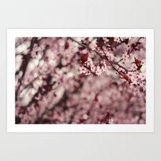 Pink Cherry Blossoms Art Print
