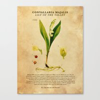 Breaking Bad - Lily of the Valley Canvas Print