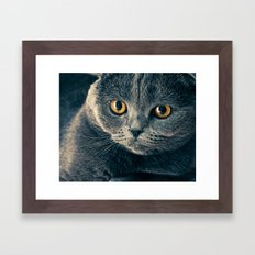 Just a Cat Framed Art Print
