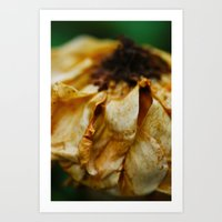 Whithering Beauty Art Print