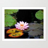 Floating Beauty Art Print