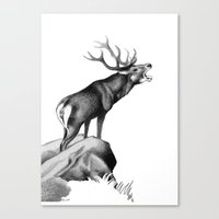 Stag Roaring In The Rut Canvas Print