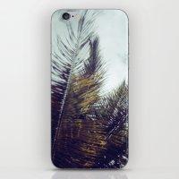 Palm Sky II iPhone & iPod Skin