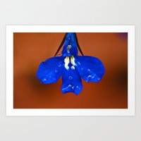 Single Lobelia Petal  Art Print