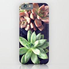 Succulents  iPhone 6 Slim Case
