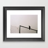 Pigeon Fence Framed Art Print