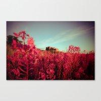 Early Morning, Bamburgh … Canvas Print