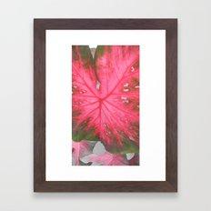 Big Leaf Framed Art Print