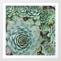 Succulents I Art Print