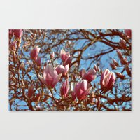 Magnolia Heaven Canvas Print