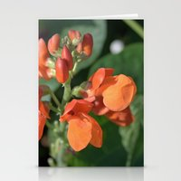 bright orange bean flowers. garden vegetable plant photography. Stationery Cards