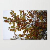 Autumn Patterns #2 Canvas Print