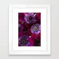 Anemone Coronaria Framed Art Print