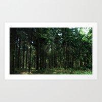 woods. Art Print