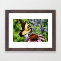 Tiger Swallowtail Butterfly  Framed Art Print