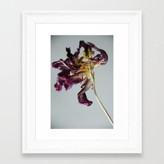 Last Dance Tulip Framed Art Print