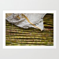 sugar cane Art Print