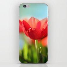 RED TULIPS IN THE SUN iPhone & iPod Skin