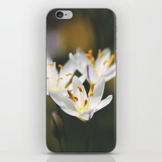 April Showers... iPhone & iPod Skin