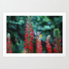 Hummingbird in Boston Art Print