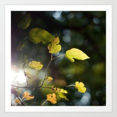 Mulberry Leaves Art Print