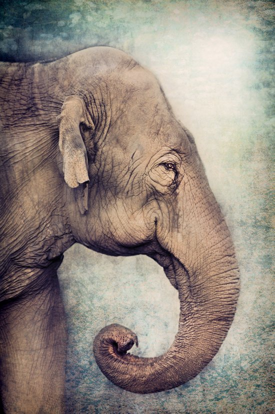 The smiling Elephant Art Print by Pauline Fowler ...