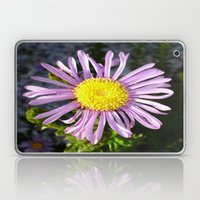 Magenta Aster - A Star of Love and Fidelity Laptop & iPad Skin